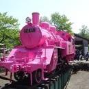 今年も鳥取に恋の季節がやってきた!5月1日は「恋の日」(51=こい) 県内がピンク一色に染まる。