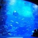 【京都水族館】~特別照明による幻想的空間演出とイルカナイトパフォーマンス~『夜のすいぞくかん』を開催