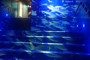 """〈2017.5.2〉サンシャイン水族館で""""水中感""""を味わいました"""