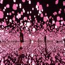 〈2019.2.13〉東京・お台場「エプソン チームラボボーダレス」 季節とともに移ろう、【春】にだけ見られる作品群が登場