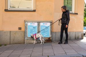 〈2021.1.14〉犬に向けた「におい」のする広告